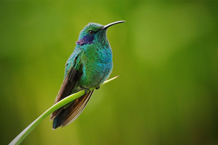 Hummingbird | VISTACANAS.COM