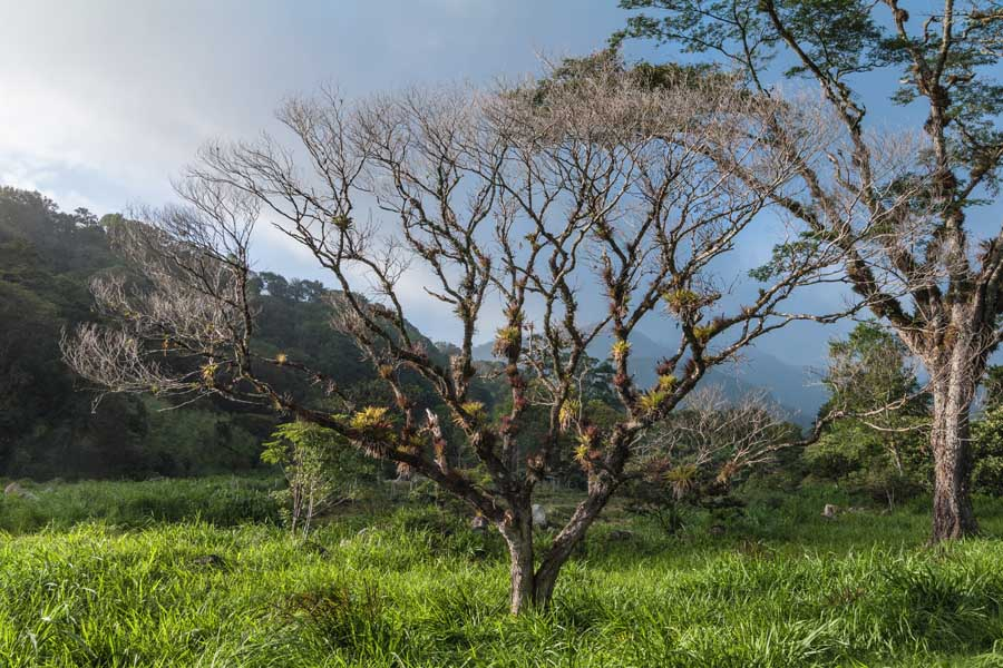 Nature on the Azuero Peninsula | VISTACANAS.COM