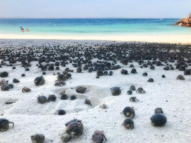 Hermit crabs on Isla Iguana   VISTACANAS.COM