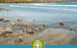 Guide to Playa Venao, Panama   VistaCanas.com