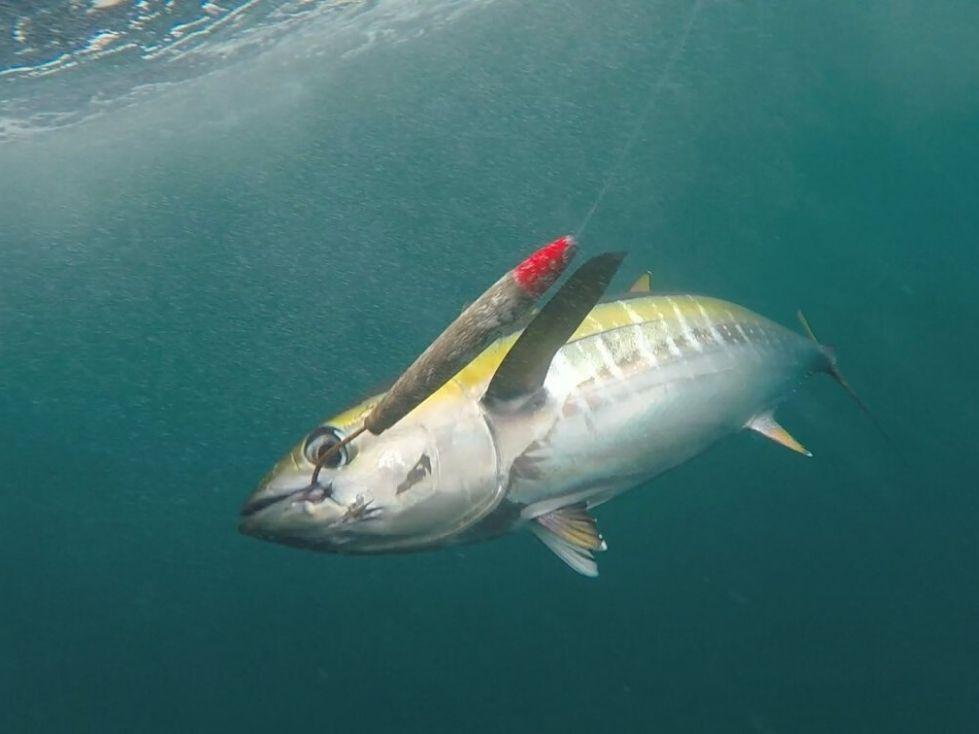 THINGS TO DO IN PANAMA: Fishing for Tuna in Panama | VISTACANAS.COM
